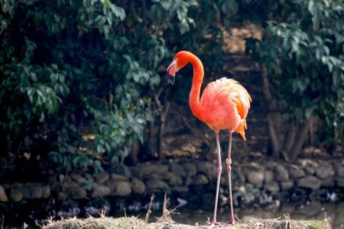 animal-beautiful-color-441222.jpg