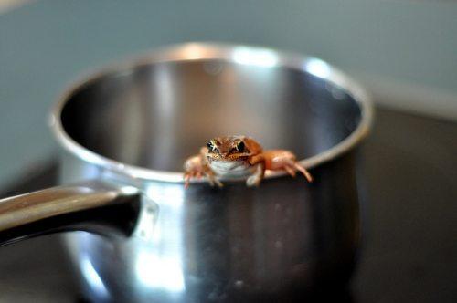 Flickr-Boiling-Frog-jronaldlee.jpg