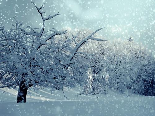 winter-1861704_1280.jpg