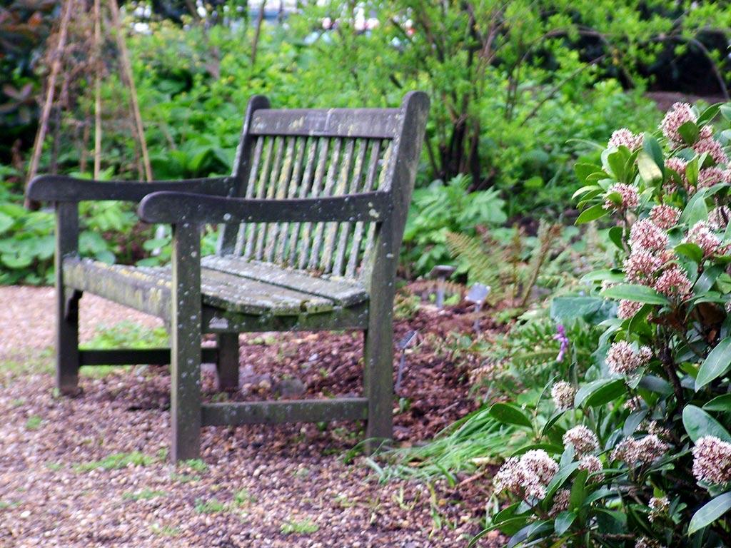 garden-bench-geranium.jpg