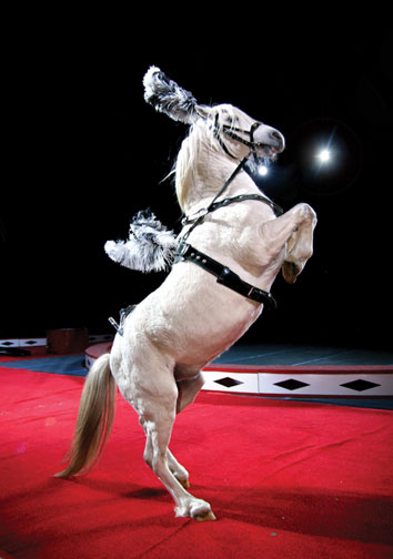 libertyhorse.jpg