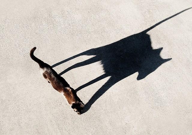 Find-Your-Shadow-Self.jpg