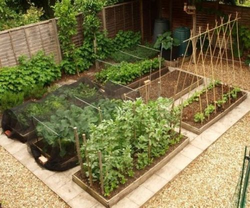 kitchen-vegetable-garden-layout-narrow-rows-600x500